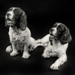 Pet Photoshoot dog